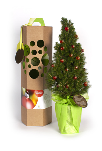 Mehr Grün für Bonn :) // Weihnachtsbäumchen, Olivenbäumchen…. zu verschenken, verschicken…