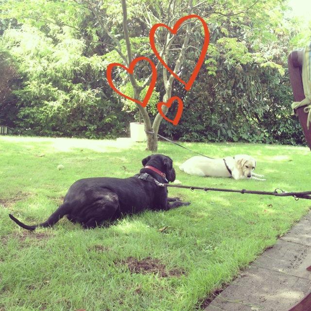 Ist Bonn auf den Hund gekommen? // Lustige Fakten rund um Bonner Hunde